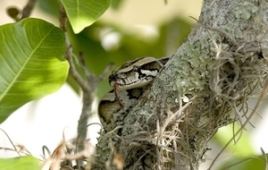 meaning-dream-vipers-hanging-from-trees