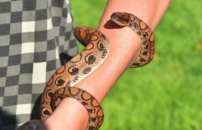 dream-meaning-snake-attacking-biting-left-arm